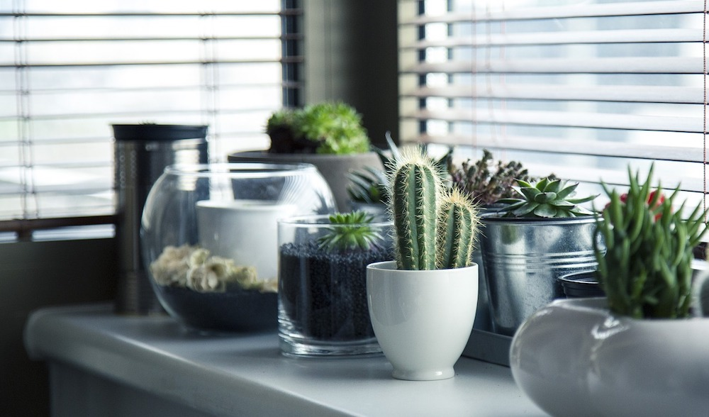 5 must haves from your home