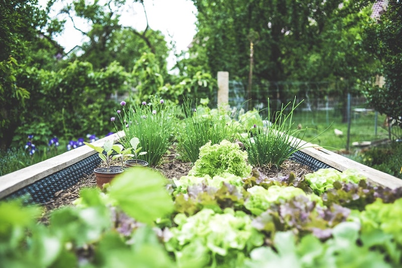 Make Your Garden Beautiful In Five Simple Steps